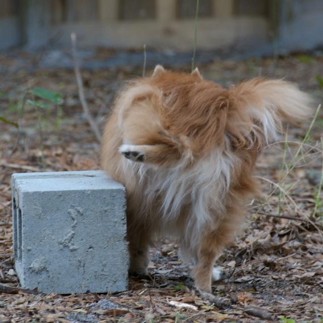 Dog Doesn T Like Dry Food